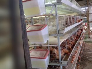 battery cage and poultry equipment