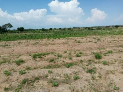 Half plots at Dawa for sale
