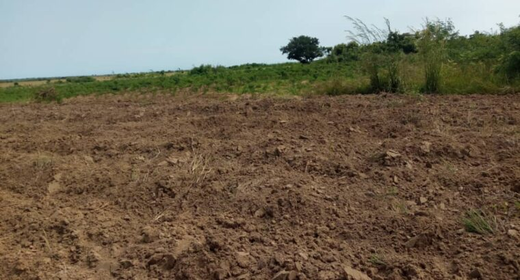 Half plots at Dawa for sale