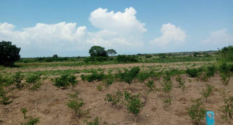Now selling, titled land at Dawa
