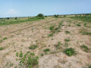 Highly demanded half plots at Dawa