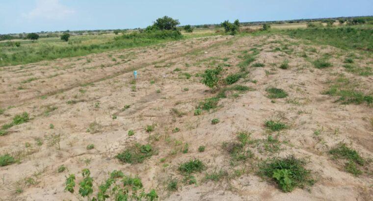 Residential Half plots at Dawa
