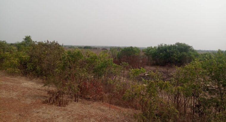 Affordable land at Dawa