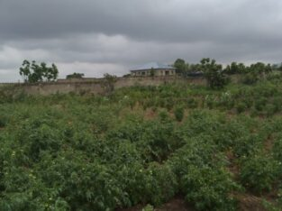 AFFORDABLE LAND AT KASOA